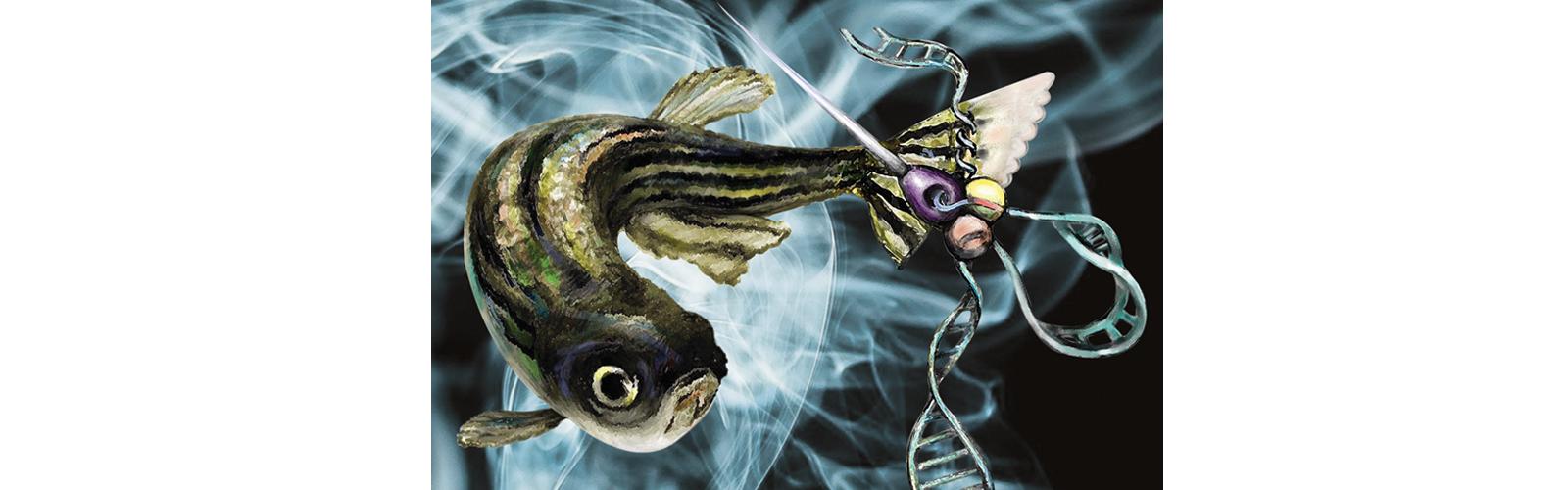Stylized zebrafish